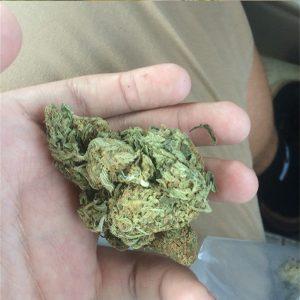 Aloha Pure Kush Marijuana